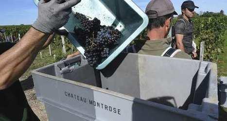 Vin: le bio séduit un nouveau grand cru classé du Bordelais | Vin 2.0 | Scoop.it