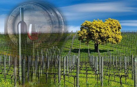 Bay Area Limo Wine Tours | Airport Transportation Services California | Scoop.it