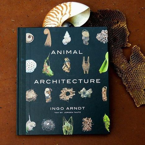Magnificent structures built by architects from the animal kingdom | Emergence synthesis | Scoop.it