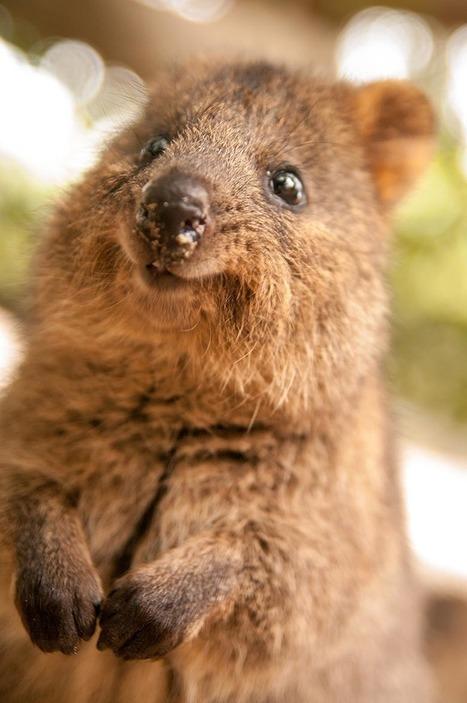 Ces 22 espèces disparaîtront probablement au cours de cette génération | The Blog's Revue by OlivierSC | Scoop.it