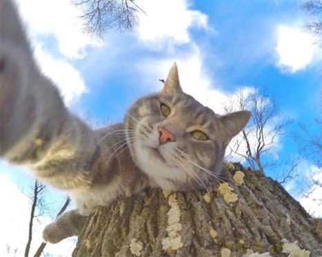 Ce chat prend de meilleurs selfies que la plupart des gens ! | Trollface , meme et humour 2.0 | Scoop.it