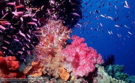 BBC Nature - Great Barrier Reef wildlife | Ecosystems | Scoop.it