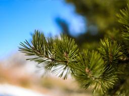 Ante el cambio climático el número de árboles nuevos disminuye pero los que ya están establecidos crecen más - Actualidad Medio Ambiente   Actualidad forestal cerca de ti   Scoop.it