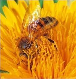 Tuin: Pollenvrij tuinieren tegen hooikoorts | Hoe - Waar | Hooikoorts | Scoop.it