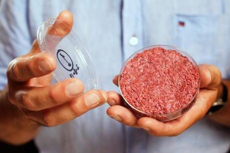 Will Your Next Burger Come From a Petri Dish? | fitness, health,news&music | Scoop.it