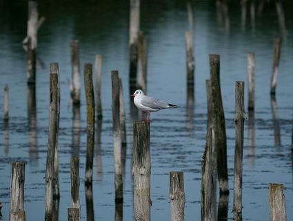 Se balader au parc ornithologique du Teich | Camping Sanguinet | Un petit goût de Vacances | Scoop.it