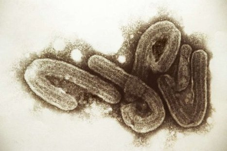 Ebola : la France prend des mesures | Toxique, soyons vigilant ! | Scoop.it