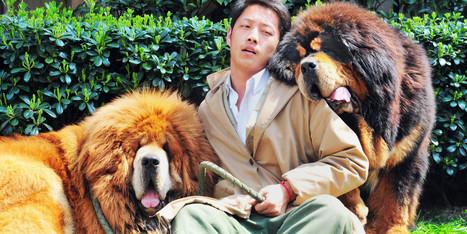 Un chien vendu pour 1,4 millions d'euros | CaniCatNews-actualité | Scoop.it