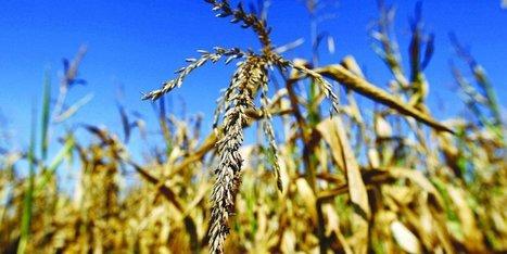 Pyrénées-Atlantiques : 2016, la pire année que l'agriculture ait connue depuis longtemps | BABinfo Pays Basque | Scoop.it