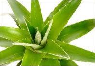 Les avantages des produits Aloe Vera - Un Monde Aloe | aloes ou aloe vera | Scoop.it