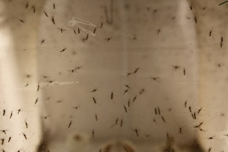 Nearly 300 Pregnant Women in the U.S. Have the Zika Virus | COMING CLEAN IS A DIRTY BUSINESS BUT WE ALL HAVE TO TAKE A BATH SOMETIME, BUT WHAT IS CHOSEN TO BE USED AS CLENSER WILL DETERMINE THE CLEANSING RESULTS! IF YOU DONT LIKE YOUR RESULTS CHANGE  YOUR CLENSER TO GOD STYLE! | Scoop.it