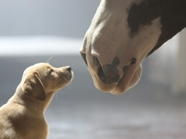 Budweiser Set to Charm the World With Its 'Puppy Love' Super Bowl Ad | Marketing & Advertising | Scoop.it