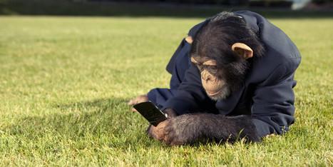 Pourquoi les zoos envahissent les réseaux sociaux | E-reputation, identité numérique | Scoop.it