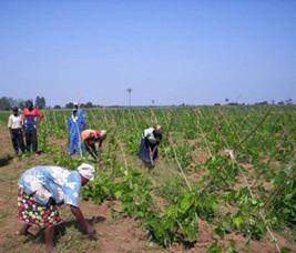 La France octroie 300.000 euros aux petits agriculteurs de Bikoro et d'Ingende | Agriculture en RDC - République Démocratique du Congo | Scoop.it