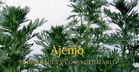 Ajenjo, propiedades y usos / EcoInventos.com   Educacion, ecologia y TIC   Scoop.it
