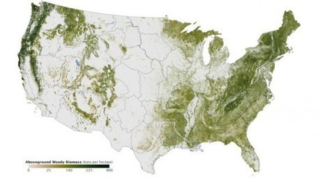 Amazing Map Shows Every Tree in the United States | conservation & antipoaching | Scoop.it