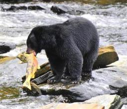 Predator-prey relationships make possible the rich biodiversity of complex ecosystems | Biodiversity IS Life  – #Conservation #Ecosystems #Wildlife #Rivers #Forests #Environment | Scoop.it