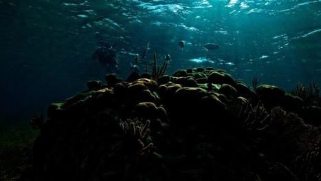 Commercial Fishing Is Destroying Key Nutrients in Coral Reefs | Coastal Restoration | Scoop.it