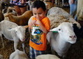 Zoos make party animals out of goats and sheep - SunHerald.com   Animal Sciences   Scoop.it
