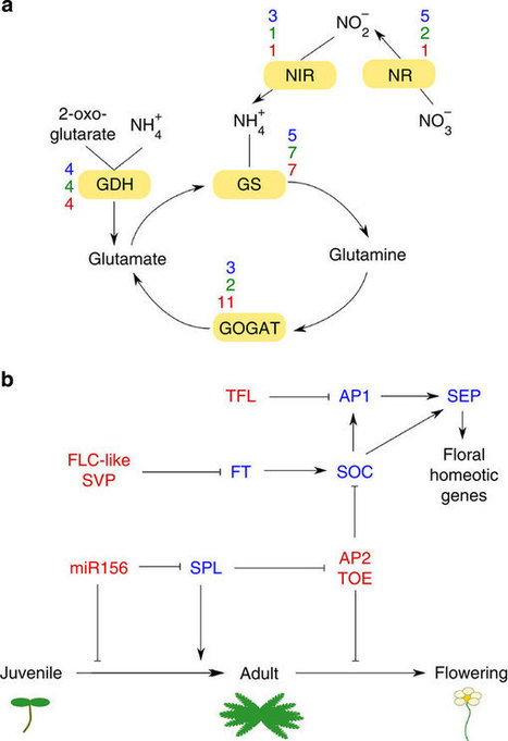 The Spirodela polyrhiza genome reveals insights into its neotenous reduction fast growth and aquatic lifestyle : Nature Communications : Nature Publishing Group | Plant Genomics | Scoop.it
