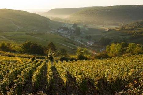 Le paysage et le savoir-faire viticole français à l'honneur à l'UNESCO | Chronique d'un pays où il ne se passe rien... ou presque ! | Scoop.it