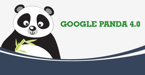 Lansarea lui Google Panda 4.0 - o solutie impotriva spammerilor   Web Design, SEO, Marketing   Scoop.it