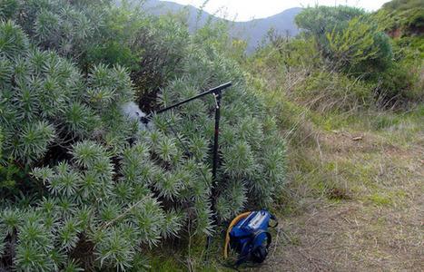 Alisios sobre Vallehermoso | DESARTSONNANTS - CRÉATION SONORE ET ENVIRONNEMENT - ENVIRONMENTAL SOUND ART - PAYSAGES ET ECOLOGIE SONORE | Scoop.it