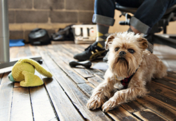 Overcoming 'No Pets Allowed' - Purina® | Pets Decisions | Scoop.it