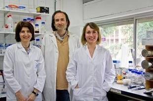 Patentan bacterias capaces de producir biodiésel de forma más eficiente y limpia | Infraestructura Sostenible | Scoop.it