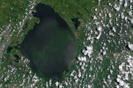 Algae problem stems from decades of Lake Okeechobee pollution | Business News & Finance | Scoop.it