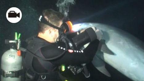 Delfín pide ayuda a buzo para que lo liberara | Video | ECOSALUD | Scoop.it