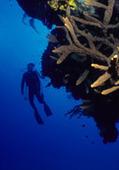 Nitrogen Narcosis vs Decompression Sickness - Scuba Diving Information   underwater robots & dangers   Scoop.it