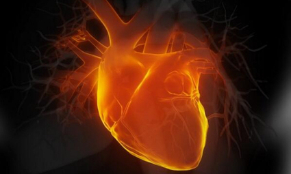 Lab-grown human heart cells could mean fewer animals used in research - Bioengineer.org   Alternatives and refinements to animal research   Scoop.it