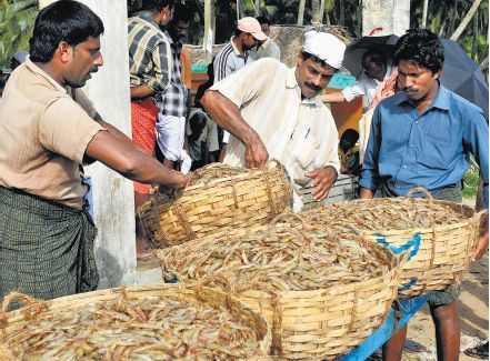 INDIA: Shrimp aquaculture production to increase five-fold | Freight Forwarding from JNPT | Scoop.it