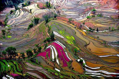 22+ Hypnotizing Rice Paddy Patterns That Look Like Broken Glass | Beautiful Things | Scoop.it