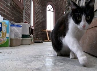 Indiana county uses cats to keep courthouse clean - WTVR | Ask The Cat Doctor | Scoop.it