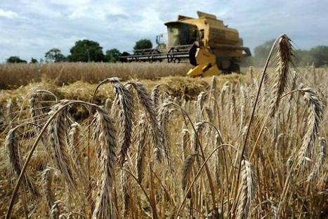 Sarthe : un bon cru pour les céréales sarthoises - Ouest France entreprises | Agriculture en Pays de la Loire | Scoop.it