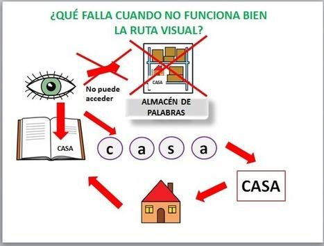 Dislexia: Acceso al léxico. Recursos y enlaces | #TuitOrienta | Scoop.it