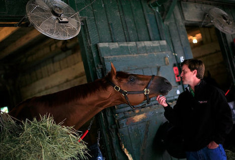 Reporting on Horse Racing, With Love Beyond Words | Horse Racing News | Scoop.it