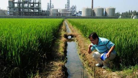 La pollution des terres agricoles s'aggrave en Chine | Questions de développement ... | Scoop.it