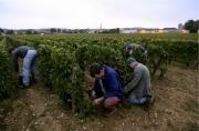 Les Etats-Unis premier marché en valeur des vins de Bourgogne ... - Les Échos | wine news | Scoop.it