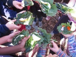 Edible Schoolyard Project Faces Funding Cuts :: Hella Delicious Food for Health, Roots, Peace and Community | School Kitchen Gardens | Scoop.it