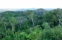 Rainforests Can Thank Fungi for Their Good Looks | Environmental Microbiology | Scoop.it
