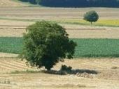 AVON PATRIMOINE: Opération de plantation d'arbres dans le Chinonais | Patrimoine Végétal et Biodiversité | Scoop.it