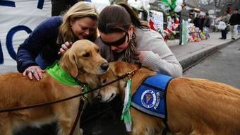 Chicago-area dogs comfort tornado victims | Pet News | Scoop.it