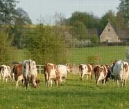 What do cows eat? | Carnivores, herbivores and omnivores | Scoop.it