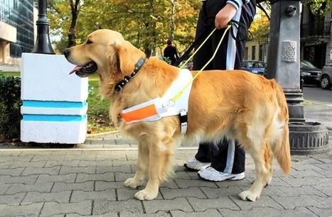 2 Cancer Sniffing Dogs That Saved Their Owners   Animal Bliss   Animal Welfare   Scoop.it