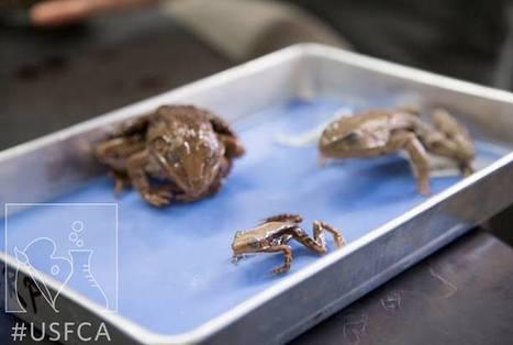 Frog science | Science | Scoop.it