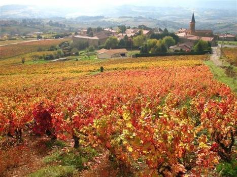 Walking Holiday in the Beaujolais, France - Guided - Beaujolais Discovery | Beaujolais | Scoop.it