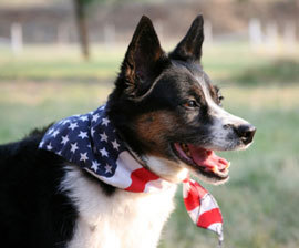 9 Tips to Keep Pets Safe During 4th of July Fun - All Pet News (blog) | Food for Pets | Scoop.it